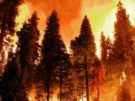 Памятка по действиям  в случае возникновения лесного пожара